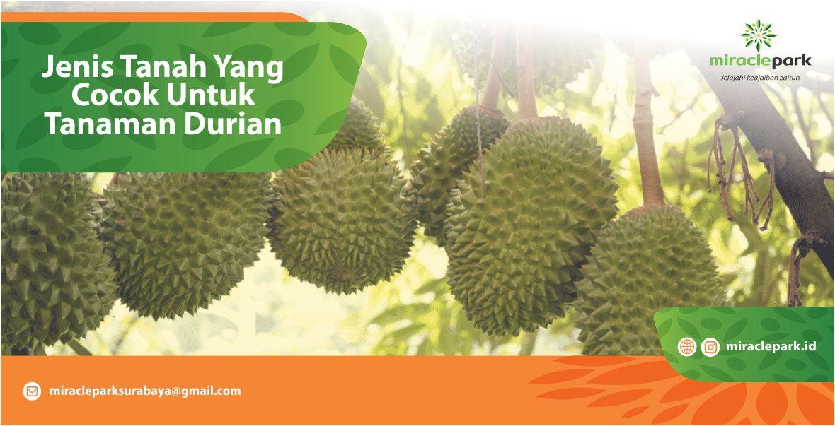 Jenis Tanah Yang Cocok Untuk Tanaman Durian