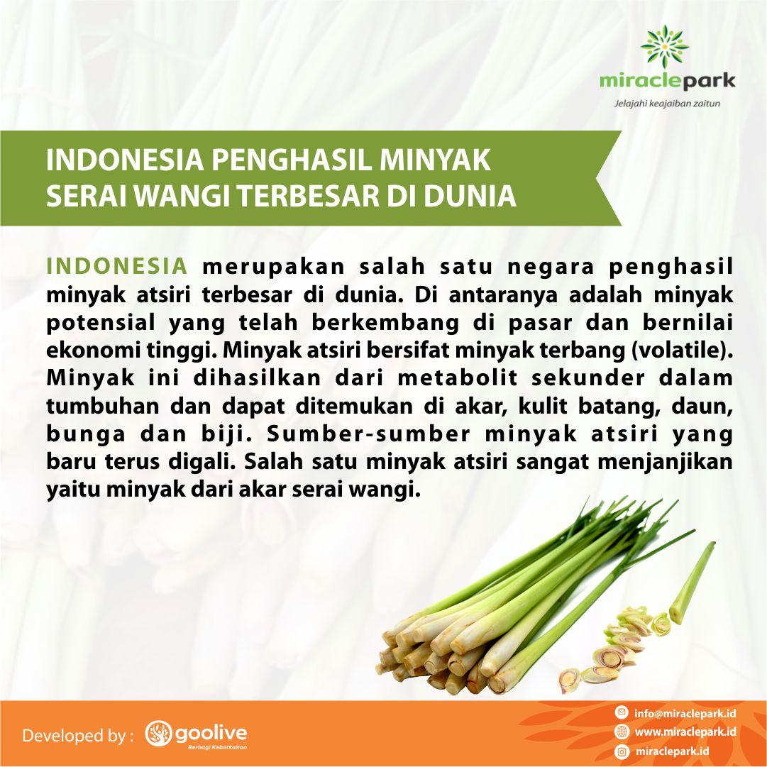 Indoonesia Penghasil Minyak Serai Wangi Di Dunia